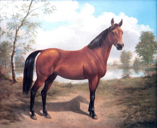 Tpe cheval - Dessiner cheval ...